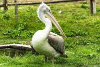 Jul&Gaux SerialHikers autostop hitchhiking aventure adventure alternative travel voyage volontariat volonteering national park pelican pelicano birds migrating oiseaux migrants albania