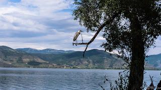 Kastoria, joyau niché entre lac et montagnes - Grèce jul gaux serialhikers autostop hitchhiking volonteering volontariat aventure voyage alternatif tour du monde world trip travel lake mountains migrating birds