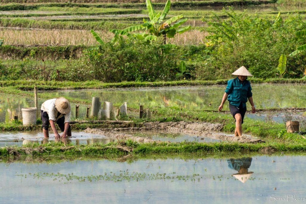 backpacking Jul&Gaux SerialHikers stop autostop world tour hitchhiking aventure adventure alternative travel voyage volontariat volonteering vietnam mai chau rizieres rice fields