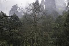 2018-12-02_zhangjiajie-park-018